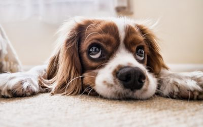 Tips For Welcoming Dogs Into A New Home
